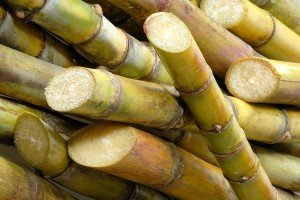 Sugarcane sticks 01