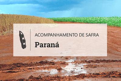 No Paraná, desafio da soja é 'tirar mais do mesmo'