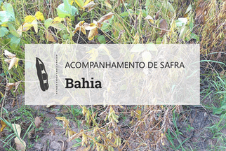 Em Barreiras, chuvas irregulares prejudicam desenvolvimento da soja