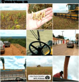 Montagem safra - post 1 - Maranhão