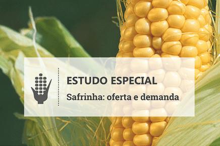 Quebra da 'safrinha' de milho agrava desequilíbrio entre oferta e demanda