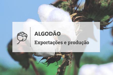 Exportações brasileiras de algodão continuam acima dos anos anteriores