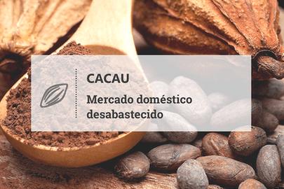 Cacau: mercado doméstico desabastecido recorre à importação para suprir demanda das esmagadoras