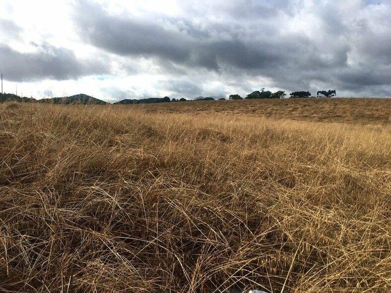 area-de-aveia-aguarda-plantio-de-soja-sudoeste-do-parana