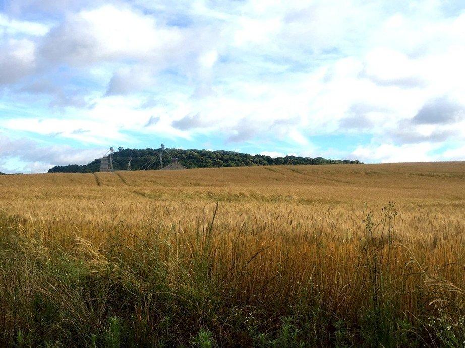 area-de-trigo-aguarda-colheita-sudoeste-do-parana