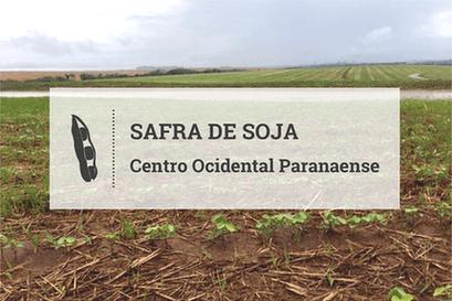 Centro Ocidental Paranaense antecipa plantio de soja com foco para a 'safrinha' de milho