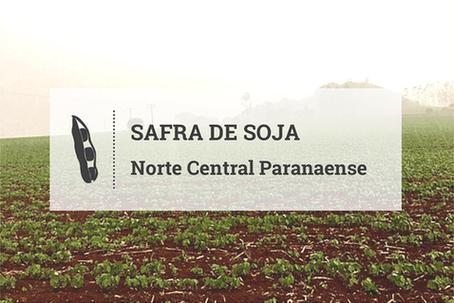 Plantio de soja evolui para 70% no Norte Central Paranaense