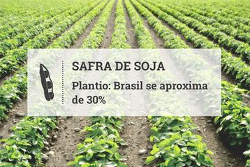 Clima dá suporte e plantio de soja no Brasil se aproxima de 30%
