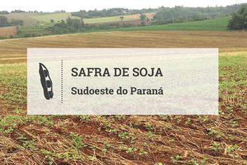 Plantio de soja avança no Sudoeste do Paraná, possibilitando expansão na 'safrinha'