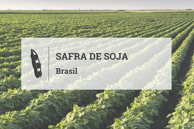 Plantio de soja já atinge 77,6% da área brasileira, estima INTL FCStone