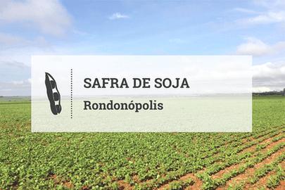 Em Rondonópolis, safra de soja avança dentro da janela e com cautela na comercialização