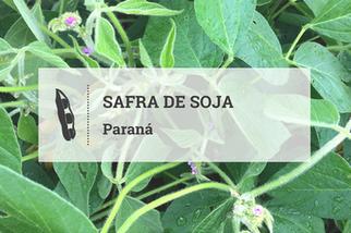 Volume de chuvas causa alerta no início da safra de soja no Paraná
