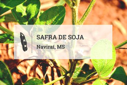 Área de soja avança timidamente em Naviraí; veranico preocupa produtores