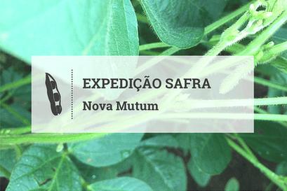 Nova Mutum se prepara para colheita com chuva em fevereiro