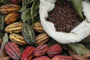 cocoa - large