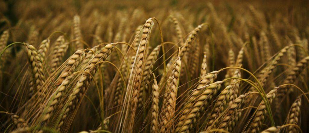 mercosul, trigo, exportações