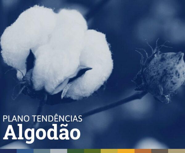PLANO TENDÊNCIAS • ALGODÃO