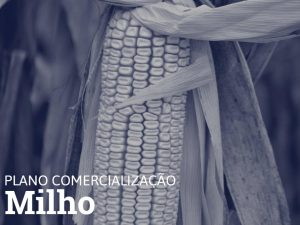 PLANO COMERCIALIZAÇÃO • MILHO