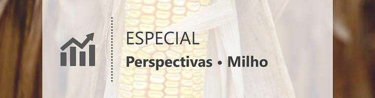 Cenário climático e definições da safra devem conferir volatilidade ao milho