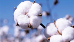 Componentes do algodão e utilidades industriais