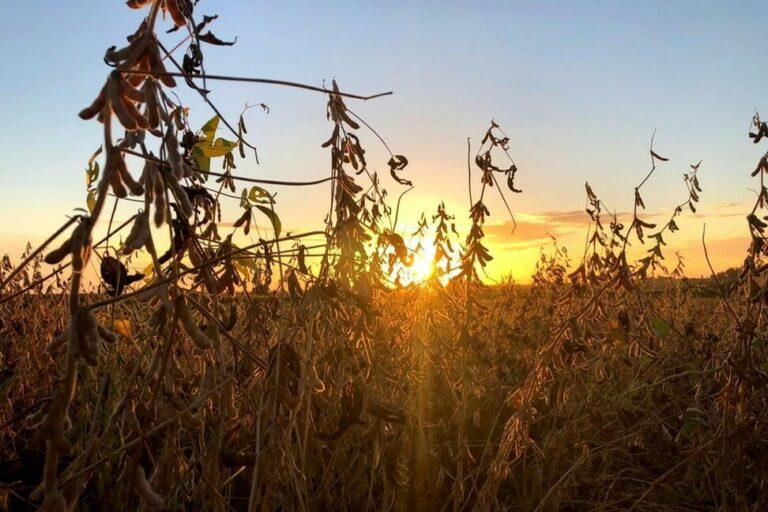 Produtividade de soja é favorecida pelo clima