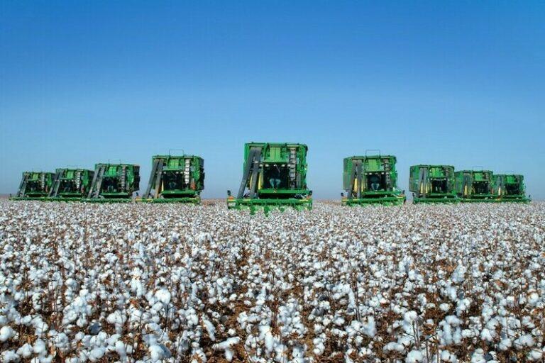 Números da Conab e do USDA são destaques da semana no algodão